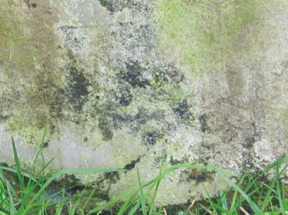 Fungal or Algae